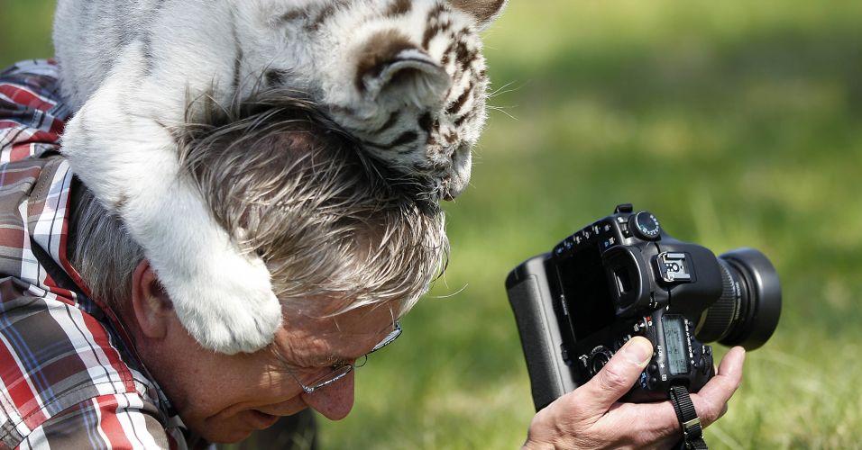 Tigre branco na Alemanha