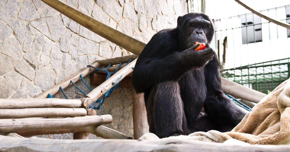 Habeas corpus a chimpanzé