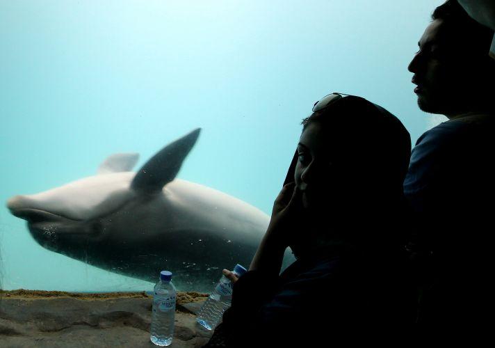Golfinho em aquário
