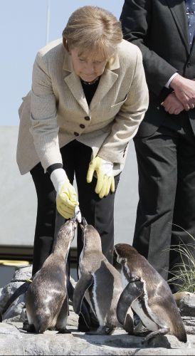 Merkel adota pinguim