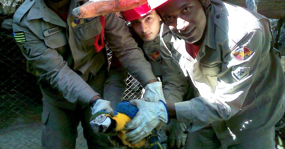 Arara-canindé resgatada