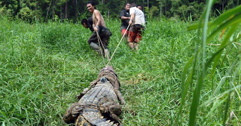Crocodilo na Malásia