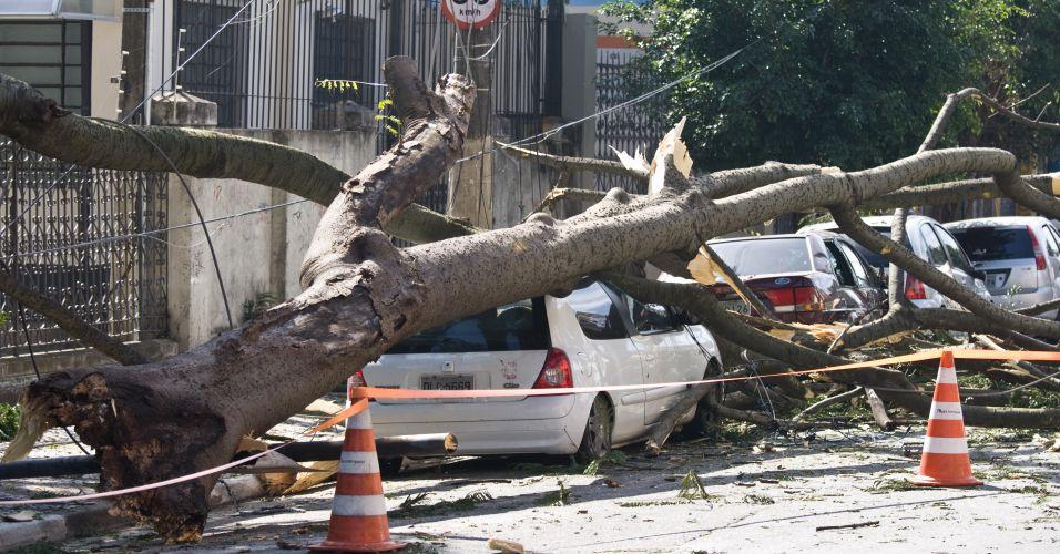 Árvore cai sobre carros em SP