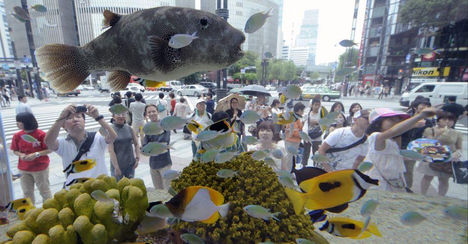 Peixes expostos em Tóquio