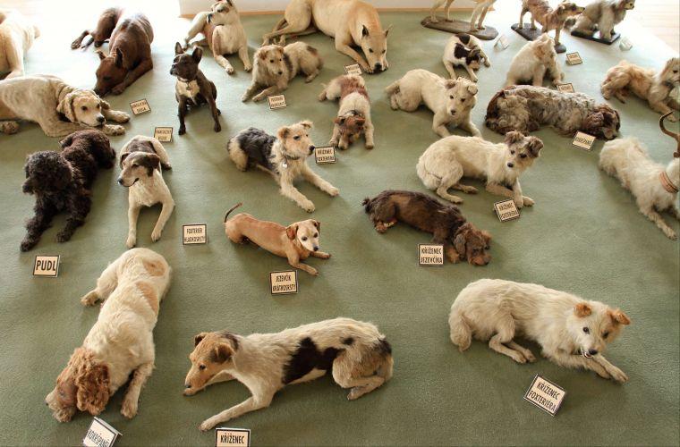 Coleção de cães