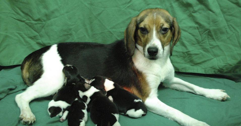 Cachorra geneticamente modificada