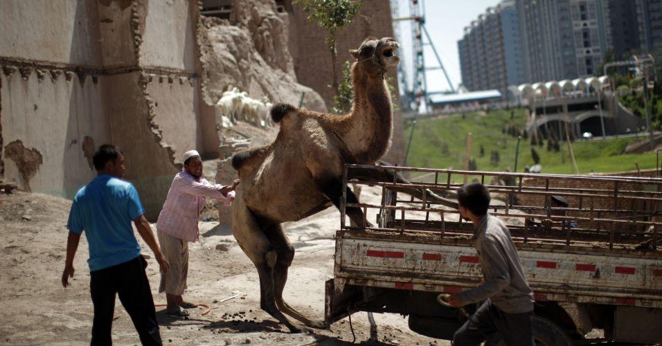 Camelo na China