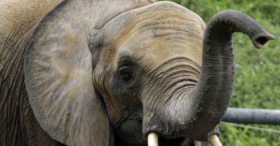 Banco de espermas de elefantes