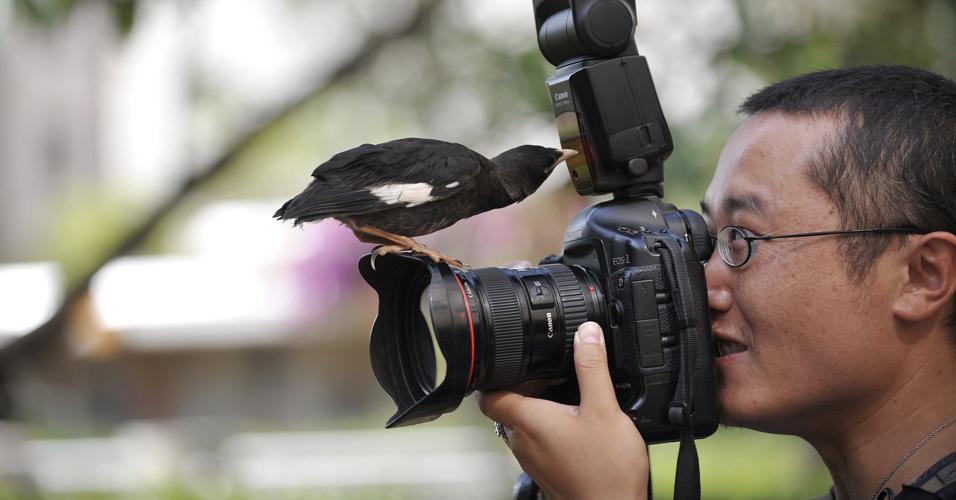 Pássaro curioso
