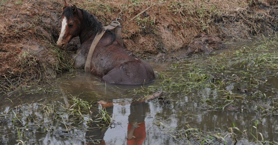Cavalo atolado em SC