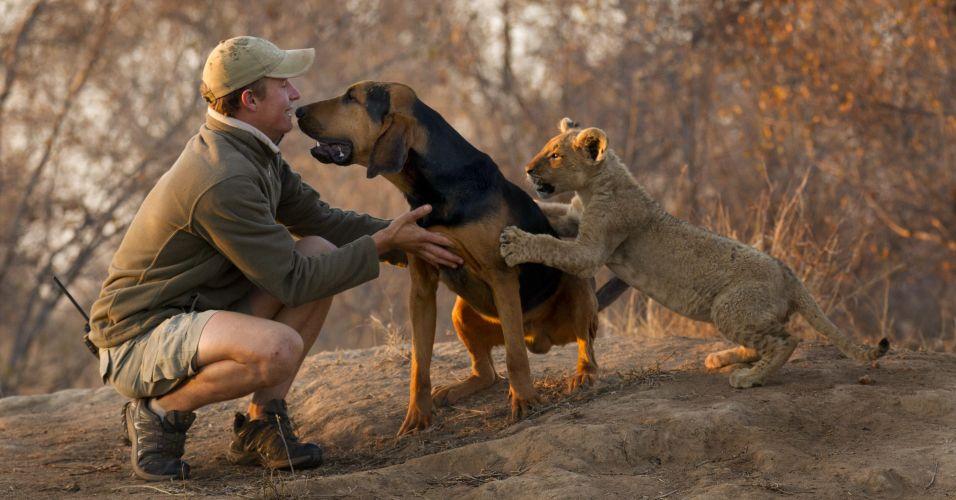 Cachorro amigo de leão