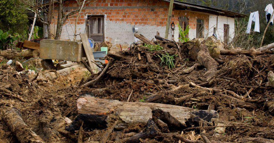 Remoção de árvores no Paraná