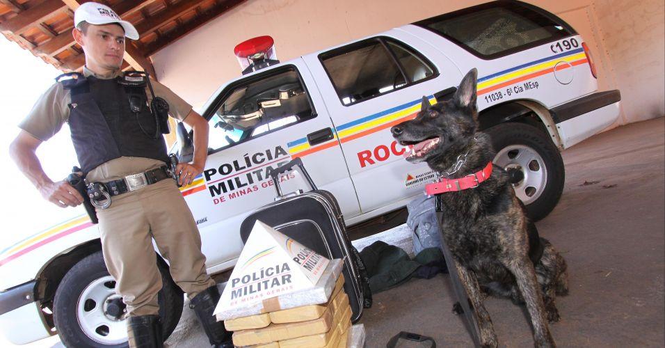 Cão da Polícia Militar de Minas