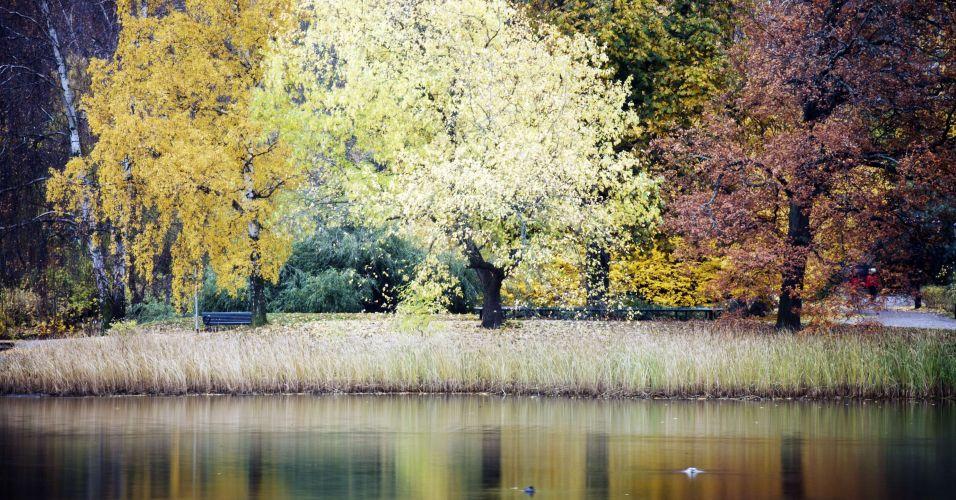 Outono na Suécia