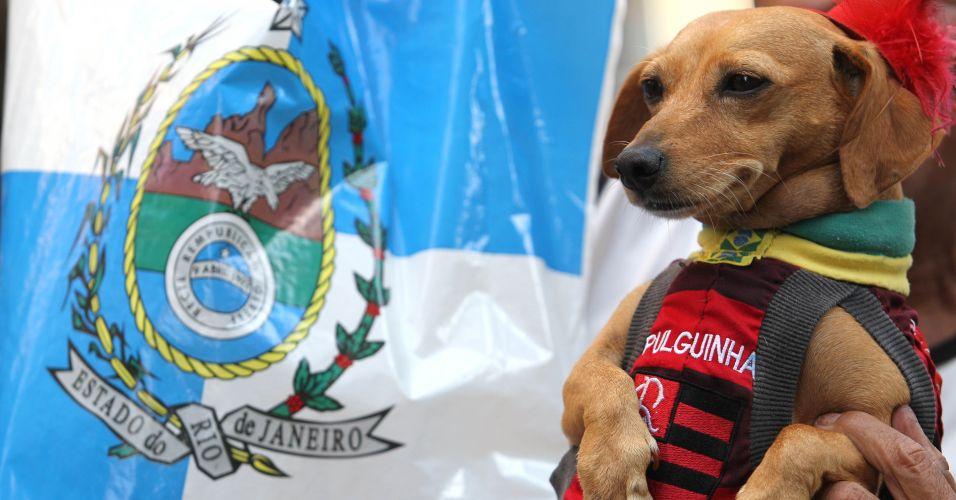Pessoa exibe cachorro em protesto no centro do Rio de Janeiro contra o projeto que reduz os royalties do petróleo para os Estados produtores (Rio e Espírito Santo)