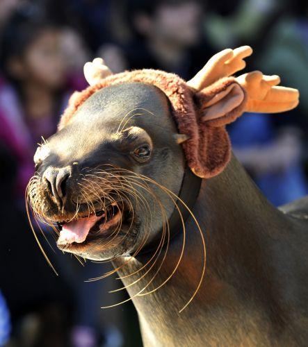 Natal no Japão