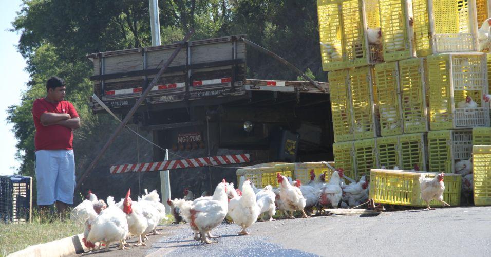 Acidente com galinhas