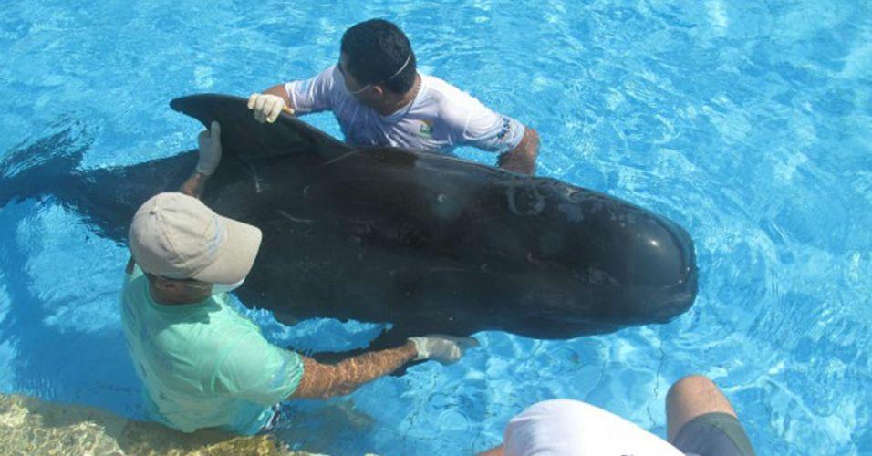 Baleia encalha no Ceará
