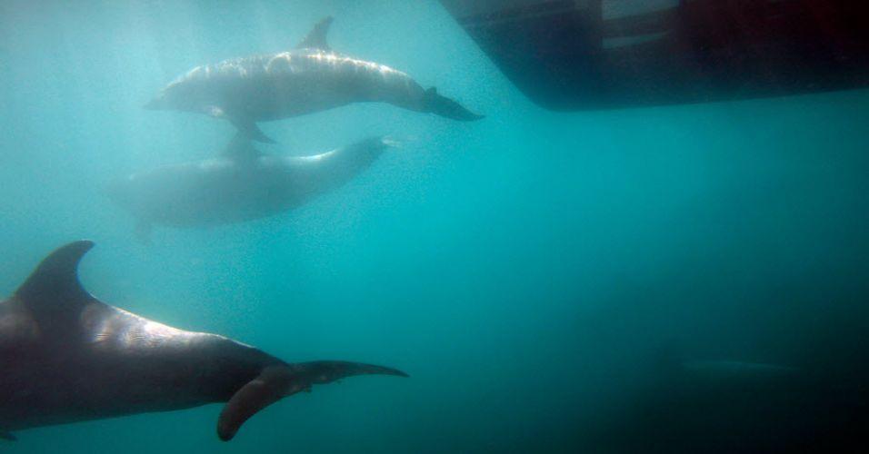 Golfinhos na Califórnia (EUA)