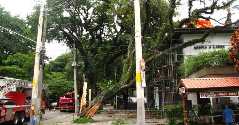 Árvore cai em SP