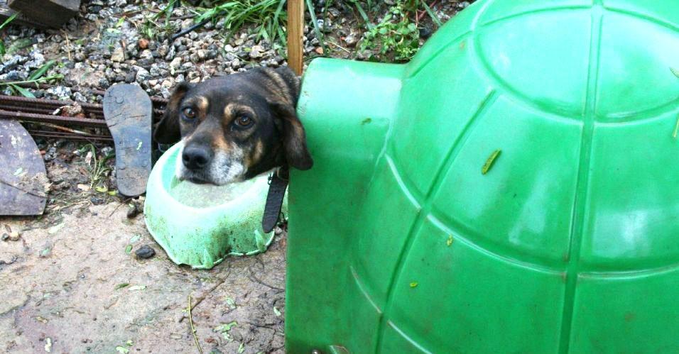 Cães sobrevivem a tragédia em Nova Friburgo