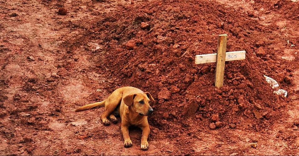 Cão guarda túmulo de dona na Região Serrana