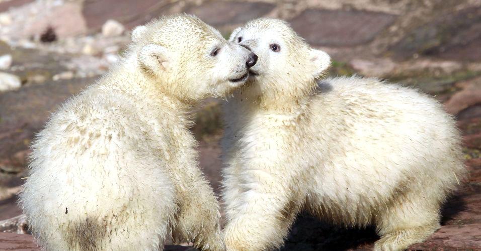 Ursinho Knut morre na Alemanha