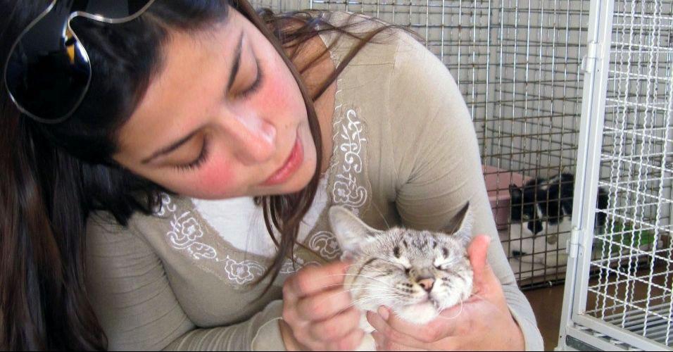 Gatos ameaçados por envenenamento são adotados