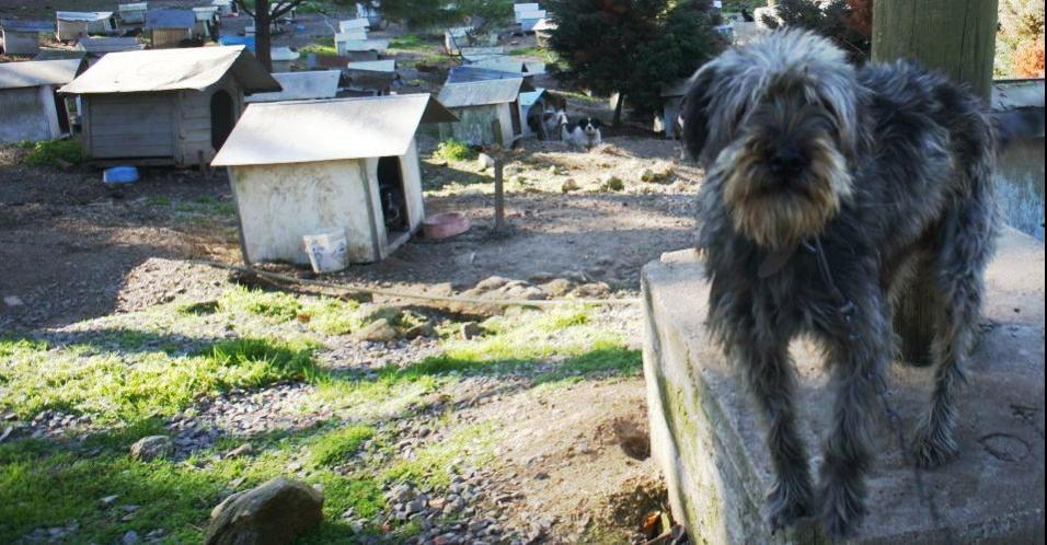 ONG abriga 1.800 animais abandonados