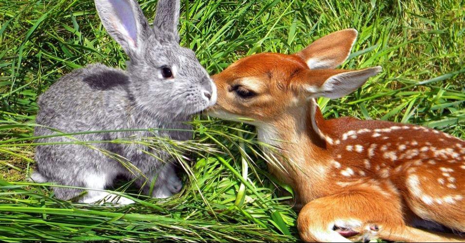 Veado Bambi vira amigo de coelho