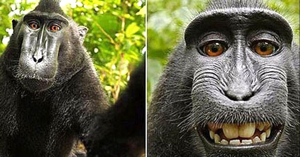 Macaco sorri para câmera
