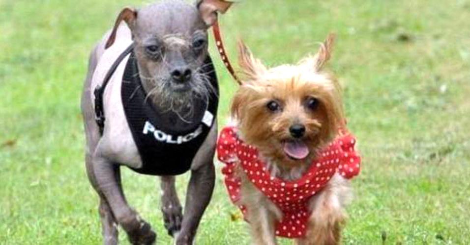 Cão mais feio do mundo descobre o amor