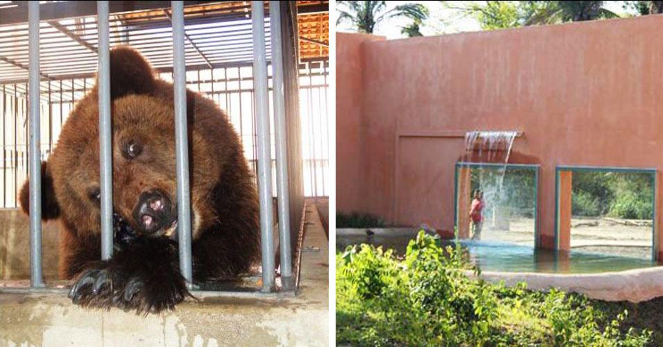 Ursos ganham cascata contra calor do Piauí