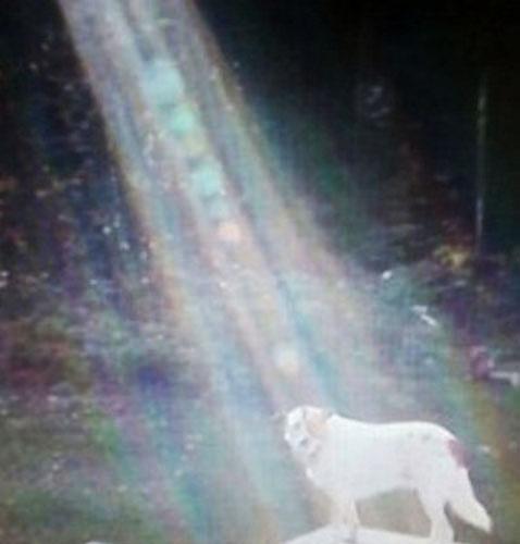 Cão iluminado após ato de heroísmo