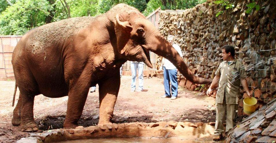 Elefante vira problema em SP
