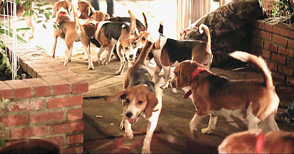 Beagles veem a luz pela primeira vez